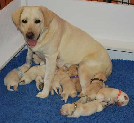 pippa and her puppies